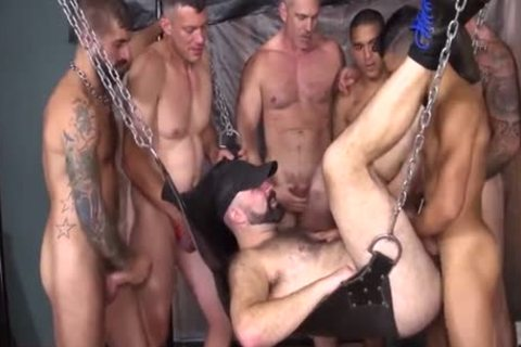 humongous Pig cocks In The sexy Sling